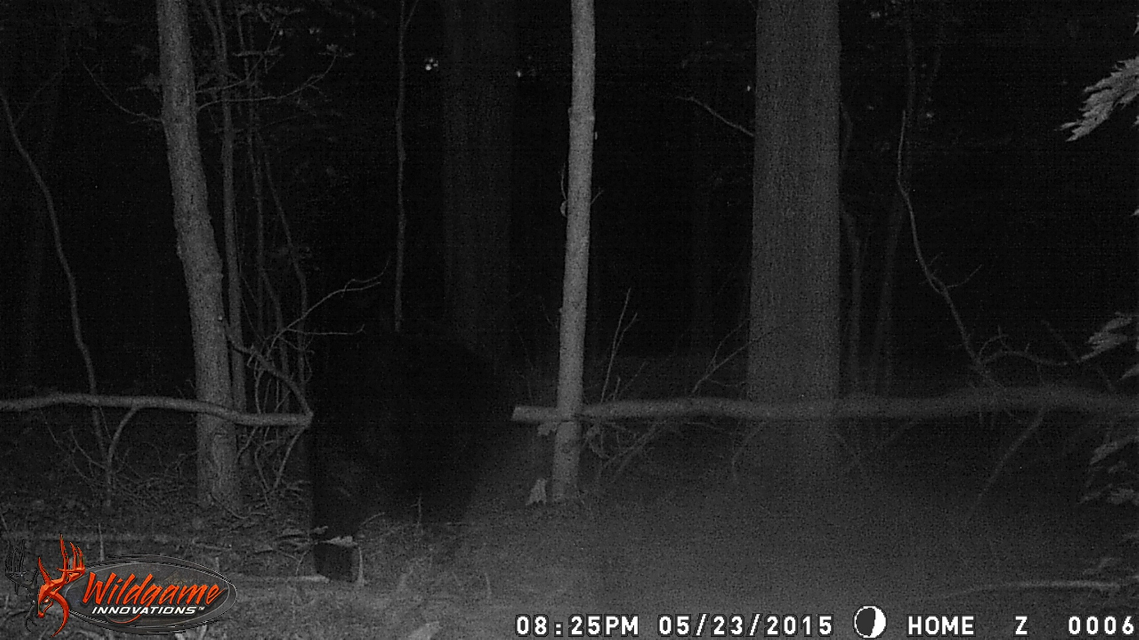 Name:  bear resize.jpg Views: 220 Size:  708.9 KB